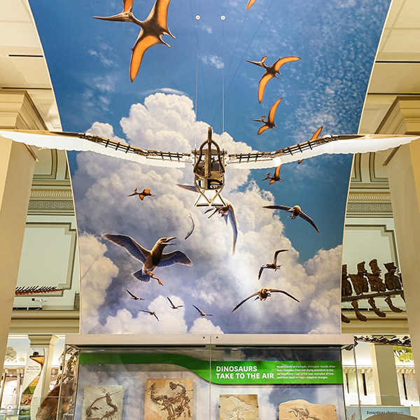 Deep Time | The Smithsonian National Museum of Natural History | Washington, DC