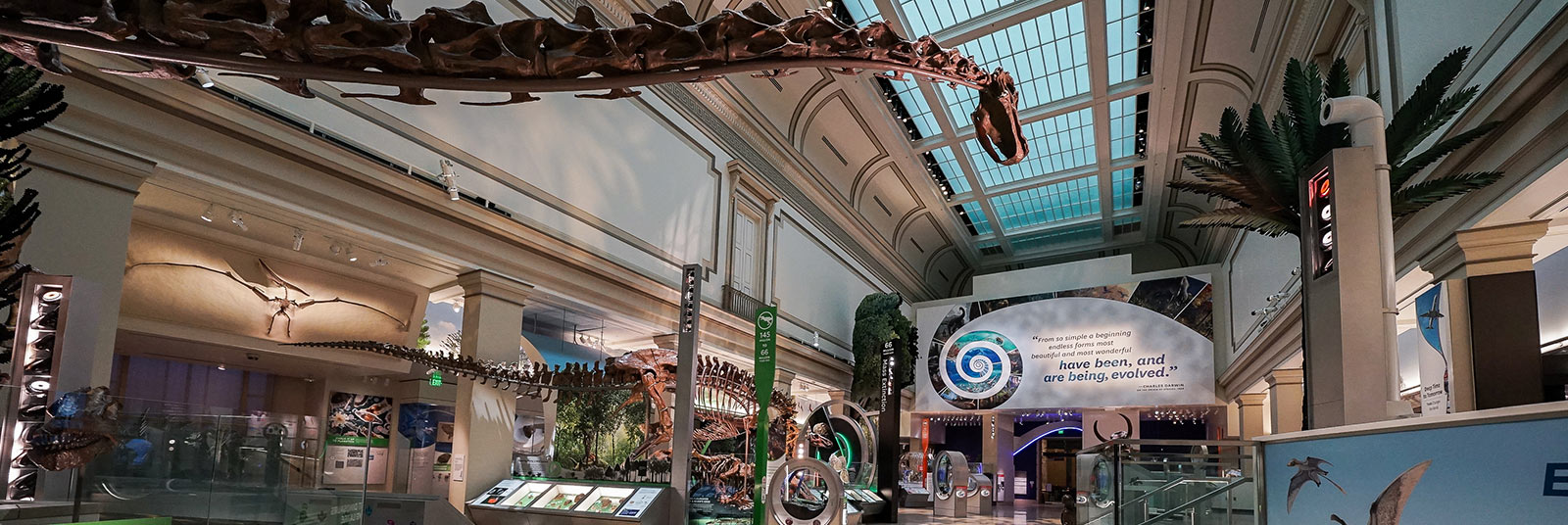 Large atrium space at the Deep Time exhibit at the Smithsonian National Museum of Natural History in Washington, DC